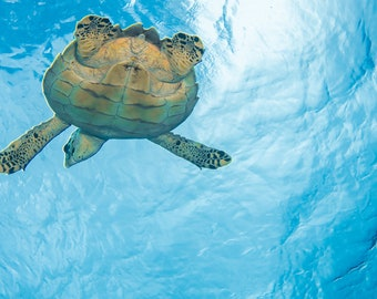 Sea Turtle Flight