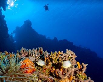 Reef Beauty
