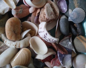 Seashells Handpicked From St. Thomas & Martha's Vineyard Massachusetts. I Can Bundle so see all my goodies!