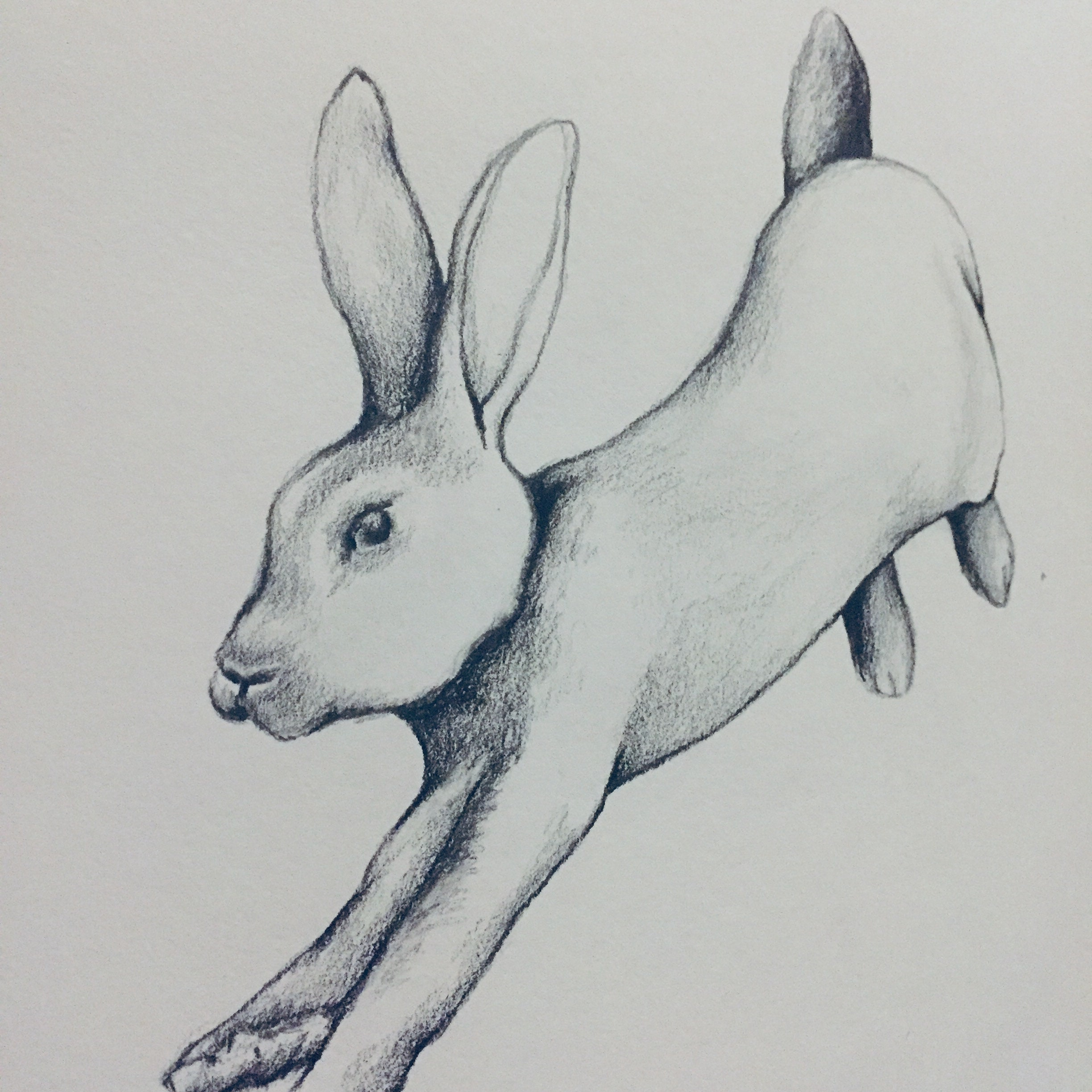 Original rabbit pencil drawing wall art country rustic decor woodland animal illustration black and white new baby gift