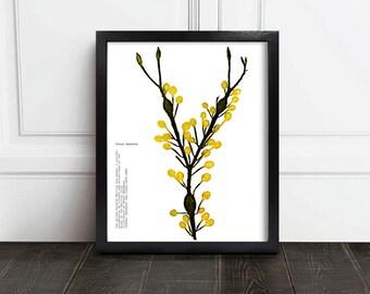 Printable Botanical / Yellow Seaweed / Yellow Botanical / Yellow Flower Art / instant download / Botanical Art/ vintage botanical