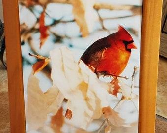 5x7 matte prints-various birds (unframed)