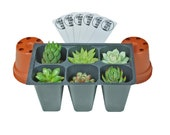 SucCuteLents Assorted 6 Pack - Live Succulent Plants Fully Rooted Plugs Ready to Be Potted with Included Bonus 2 quot Terracotta Plastic Pots