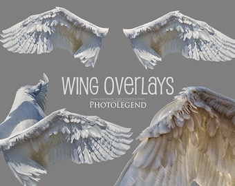 PNG Overlays WHITE WINGS