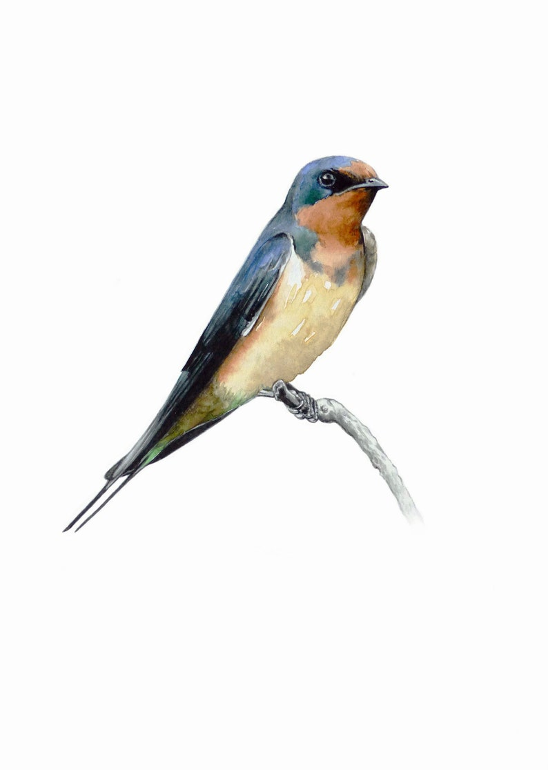 Bird Lovers Gift Ornithology Wall decor Collection Home Decoration Nature Art Watercolor Painting Fine Art Print Barn Swallow Birds