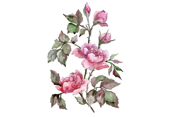 Pink Rosa Watercolor Clipart Hand Painted Flowers Free Etsy