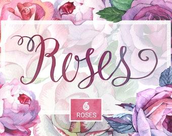 Romantic set of 6 PNG watercolor roses