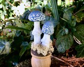 Blue Toadstools