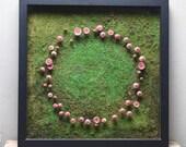 Large Fairy Ring Mushroom...