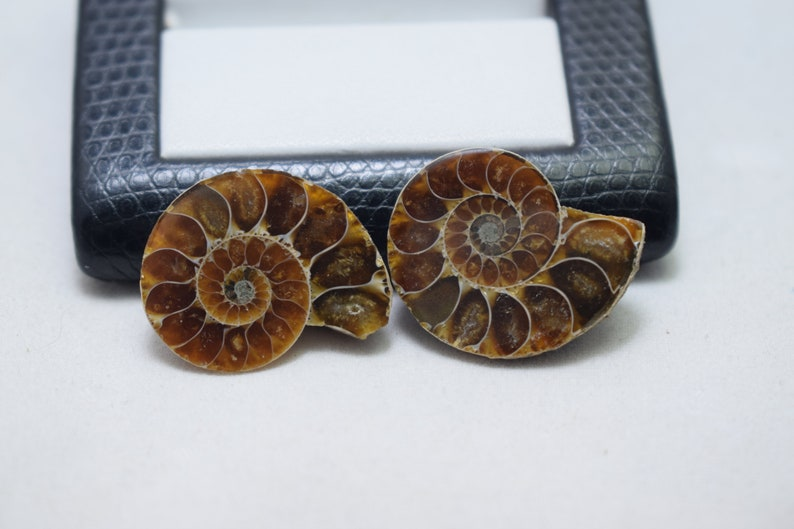 Amazing Natural Ammonite Polished Fossilized Sliced Set Of Two Shell Ammonite For Beautiful Jewelry Making Free Drilling On Request M-18