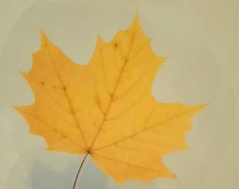 Yellow leaf bookmark