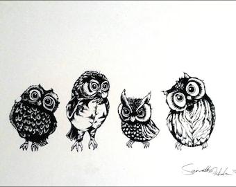 Owlet of curiosity