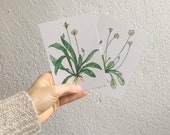 """2 postcards """"Wild Plants"""" with daisy and Spitzwegerich motif - Wild Herbs Watercolor Illustration"""