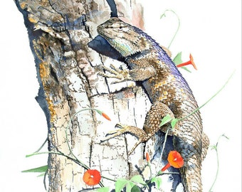 Desert Spiny Lizard with Morning Glory
