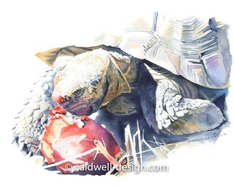 Desert Tortoise and Prickly Pear Fruit