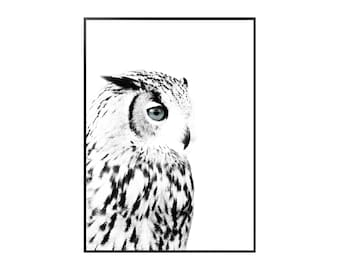 Owl Poster - Nature - Black - White - Scandinavian - Print