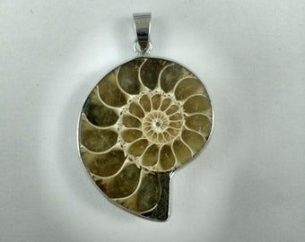 Natural Ammonite Fossil Pendant