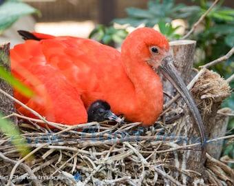 Bright Bird and Chick