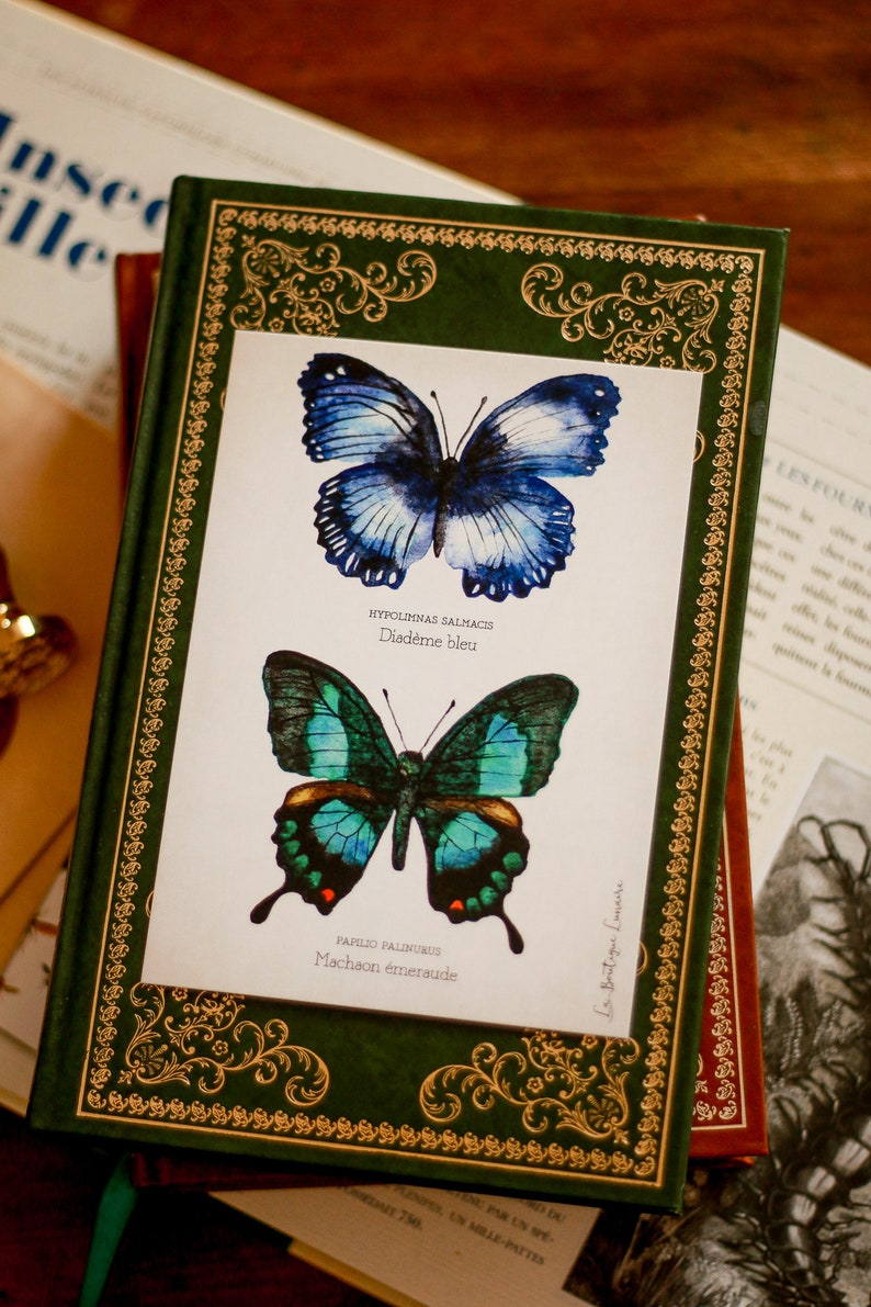 Curiosity Cabinet Butterfly Study Board A6