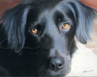Hyper-realistic dog portrait completely hand drawn in colored pencil - your custom pet portrait from your photo