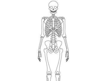 image regarding Printable Human Skeleton to Assemble named Human skeleton Etsy