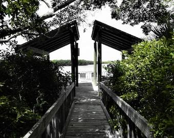 Peaceful Walkway- Nature, selective color