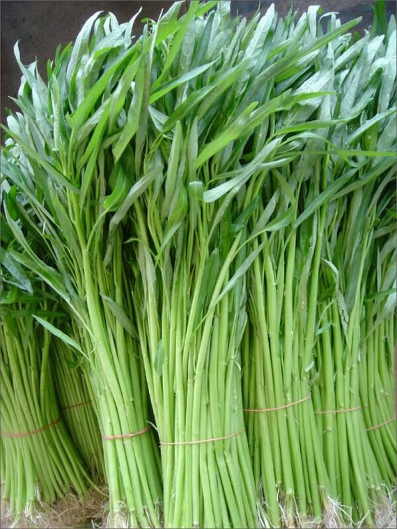 Kangkong Pak Boon,Water Spinach Seeds PKT Thai Bamboo Leaf Kang Kong,Ong Choy