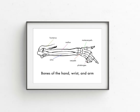 Anatomy of arm, wrist, and hand vintage style printable