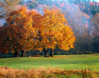 Autumn Foliage #1, Interior Design Downloads
