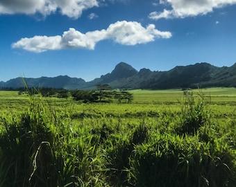 Kauai | MANAWA | Now is the moment of power.