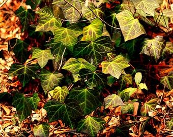 Waterslide decal - leaves
