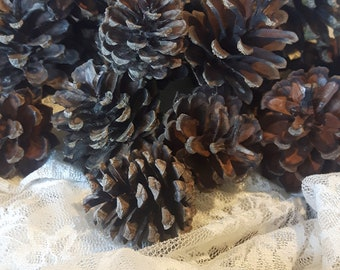 Set of 20/ 40 Pine Cones/ Europe pine cones/ dried pine cones / sold by quantity/  crafts, decorations, mounting plants / mixed sizes