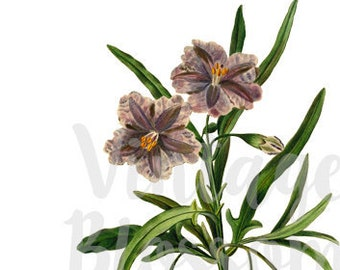 PNG Flower, Clip Art for Invitations, scrapbook, Card making, collage, prints - 1318