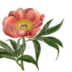 1346 artwork VIntage FLower PNG for invitations prints Botanical Digital Download Vintage Flower Clip Art