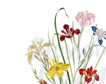 Clipart Florals, Vintage Florals Clipart, wedding clipart, floral illustration, vintage images - 1490