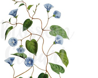CLipart Florals, Vintage Flower Clipart, Digital Download - 1530