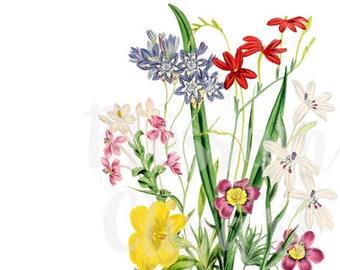 Clip Art Florals, Vintage Flowers Clipart - 1480
