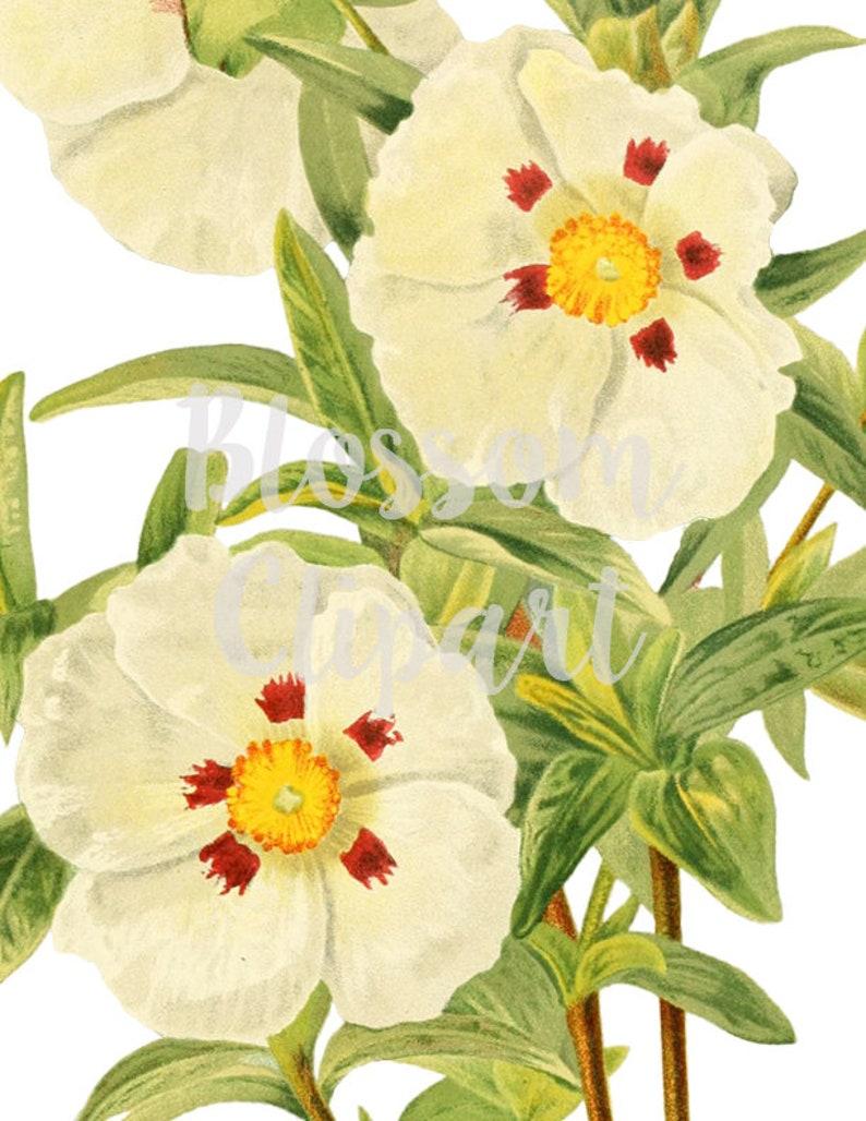 16 mm 4 Flower White Watermark Connectors