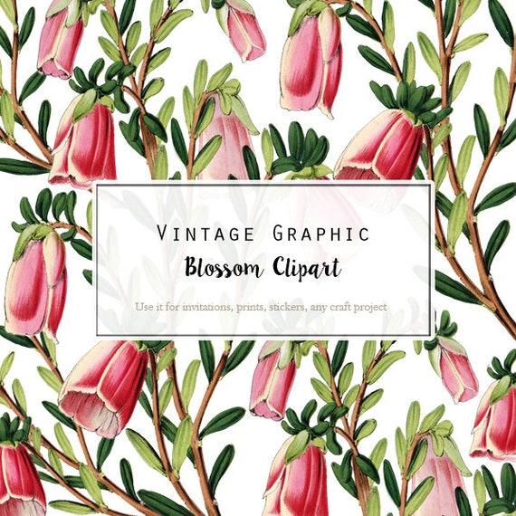 Pink flowers clip art botanical illustration for digital etsy image 0 mightylinksfo