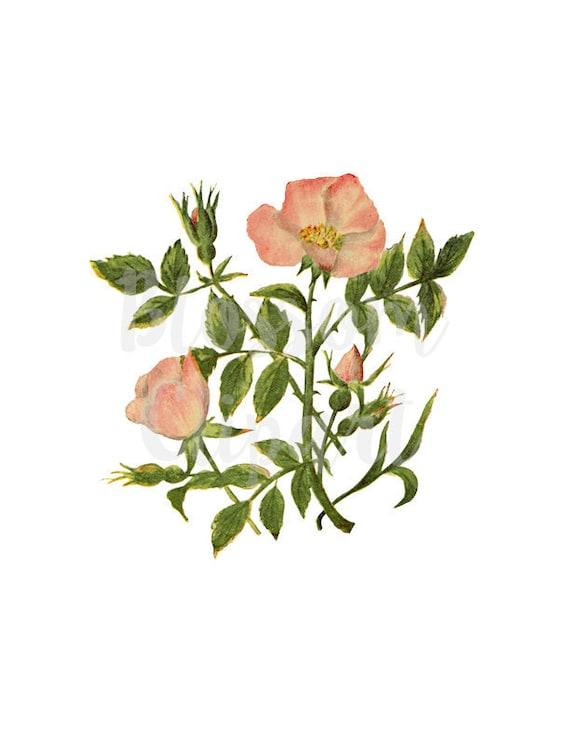 Digital Download Vintage Flower ClipArt, Vintage Flowers , 1534