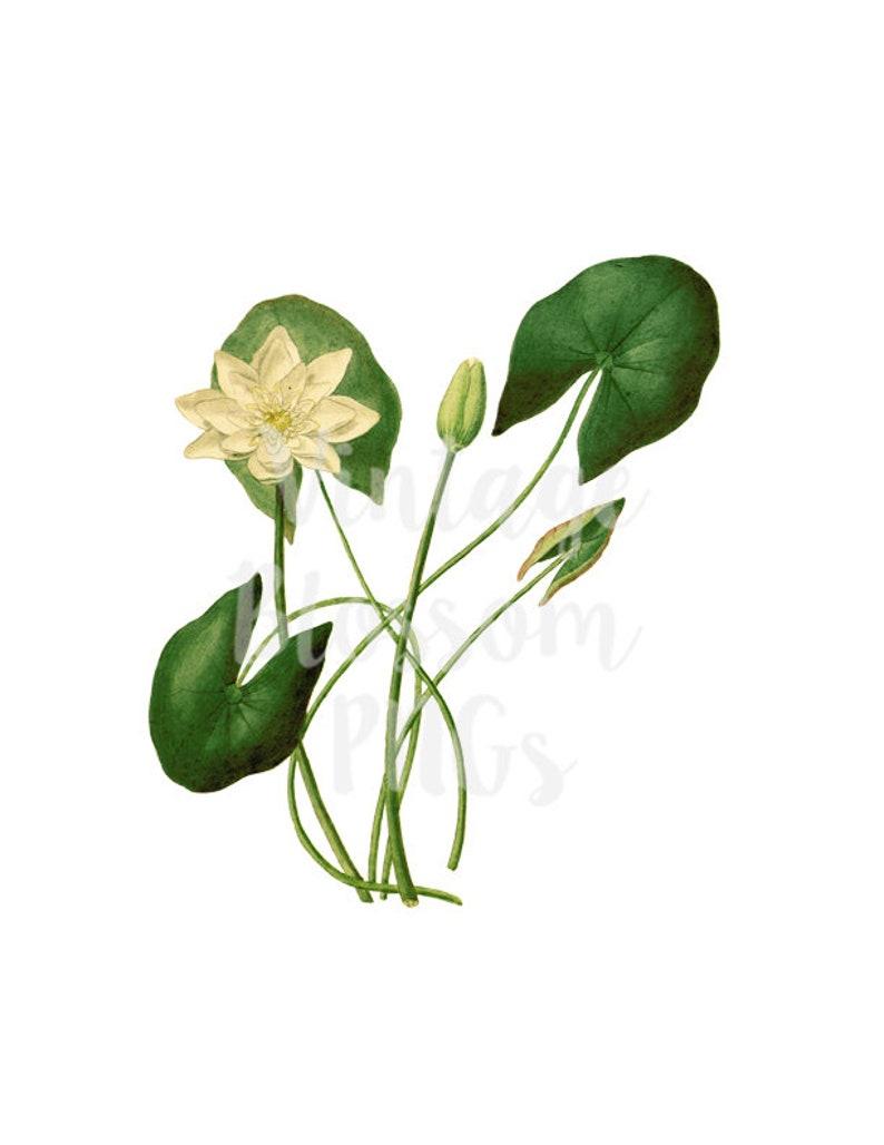 87579c2fffd2 Lotus FLower Illustration Clipart Flower PNG Botanical Clip