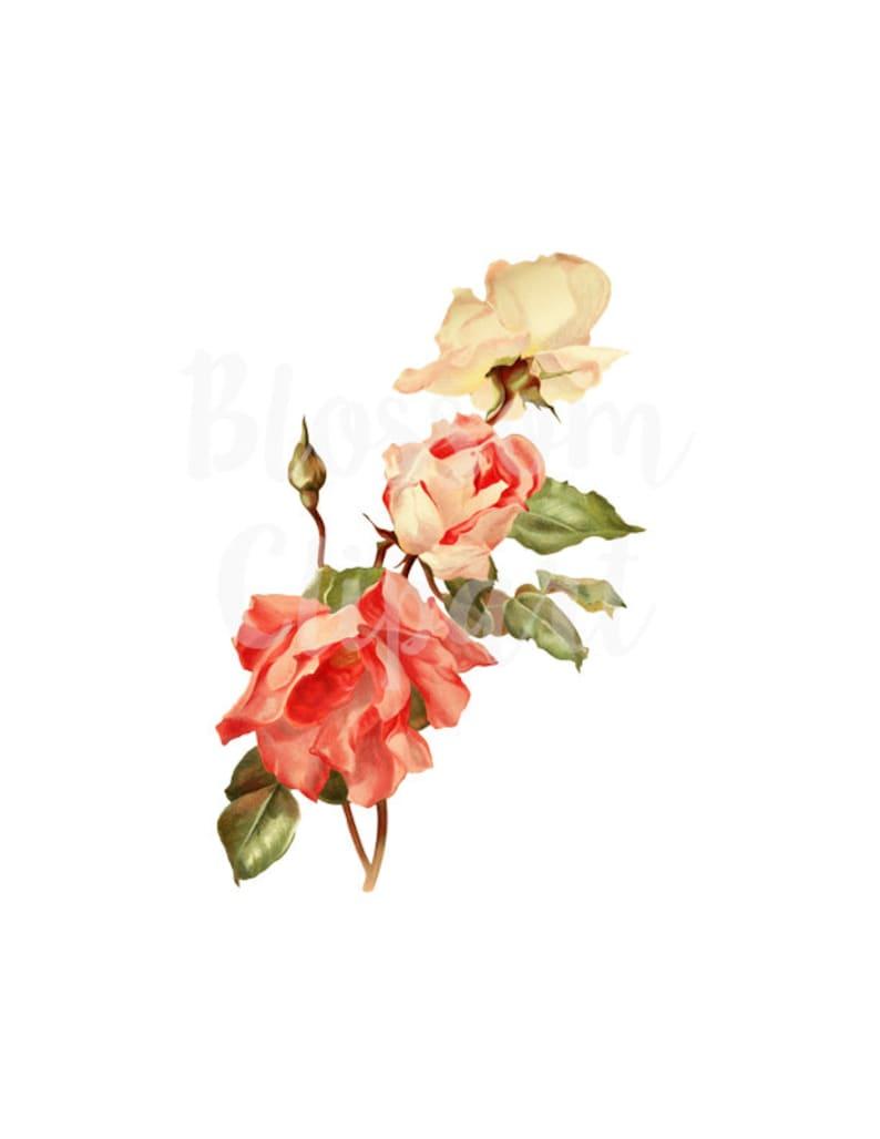 2376 scrapbook Vintage Rose Digital Download Rose for Invitations collage prints Card making