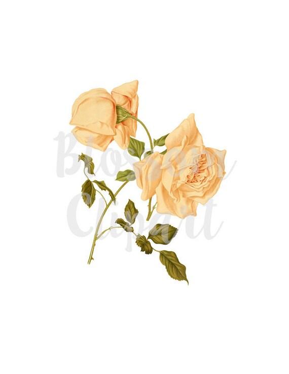 Free Flower Clip Art - Shabby Chic Flower Png Free, Transparent Png ,  Transparent Png Image - PNGitem