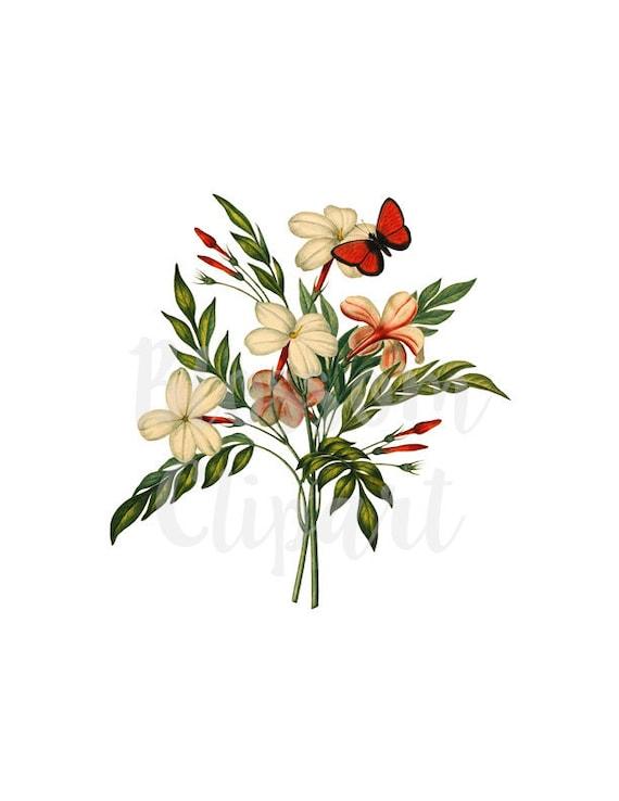 Vector flower vector vector Jasmine plants   Vector flowers, Flower  illustration, Flower clipart