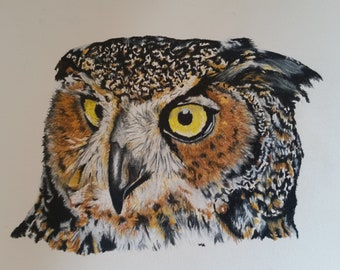 Owl original color pencil