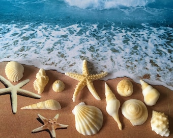 Edible Fondant Seashells Starfish Mix, Assorted Fondant Seashells Cake Cupcake Decorations