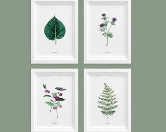 Pflanzenposter | Etsy