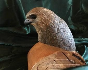 Red tail hawk head