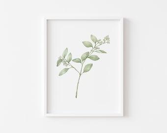 Seeded Eucalyptus Art Print- Watercolor- 8x10- 118lb Cotton Paper- Wall Art- Two Stems