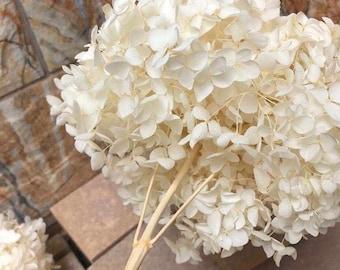 Big size Creamy white Preserved hydrangea Diamter 20-22cm, hostensia, bridalflower, preserved white/bleached